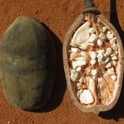 Oli Vegetali e altri Lipidi  Olio di Baobab - Adansonia Digitata