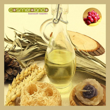 Oli Vettori Convenzionali e Bio Olio di Vinaccioli - Vitis vinifera